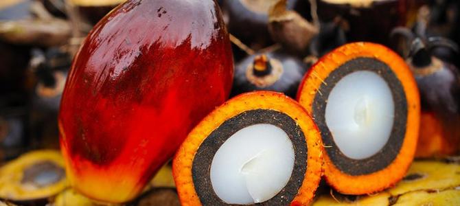 Рынок пальмового масла Украины.
